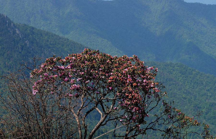 湖北:巴东县小神农架原始森林秘境 - 园林资讯 - 中国图片