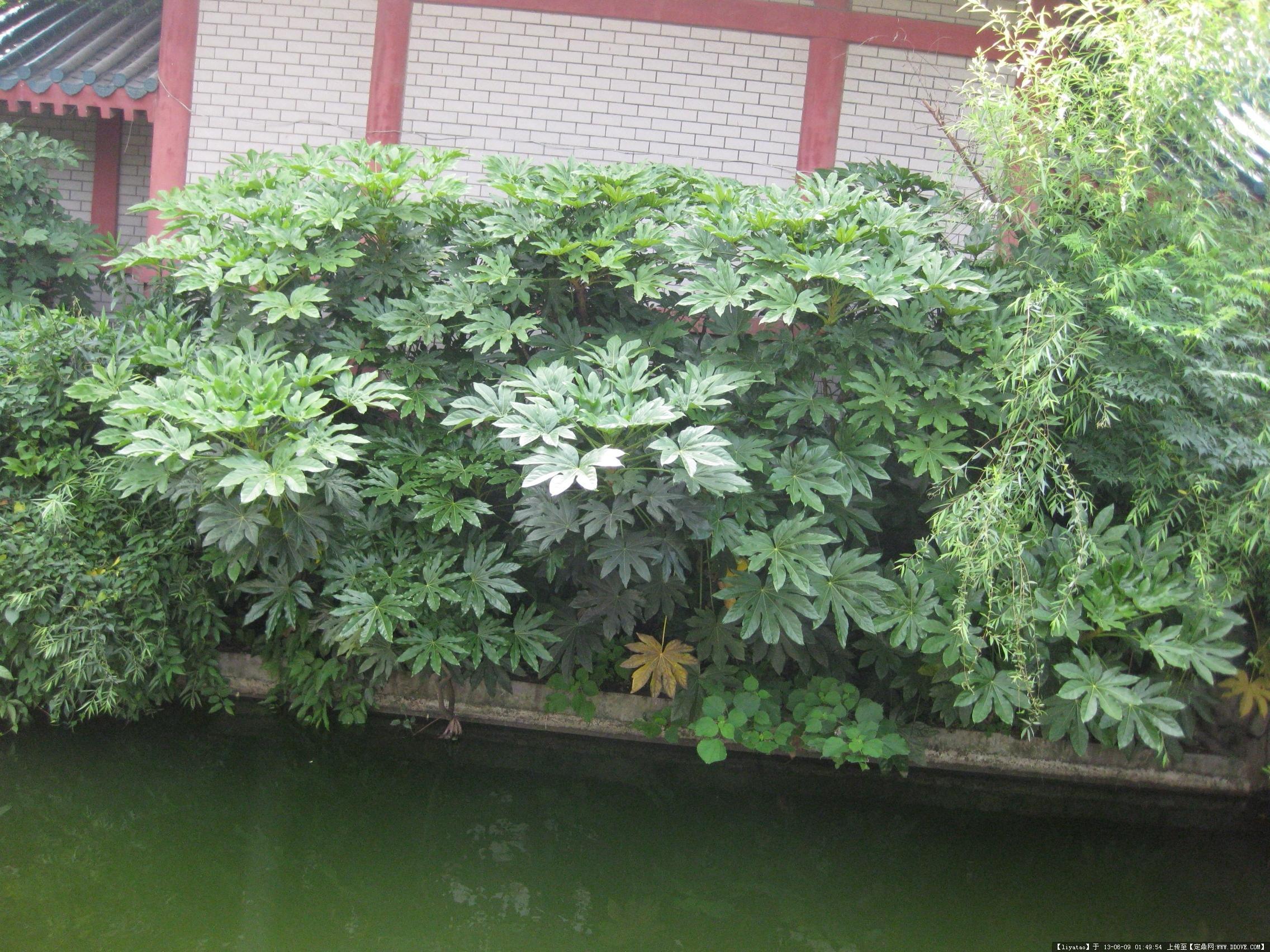 园林植物实景
