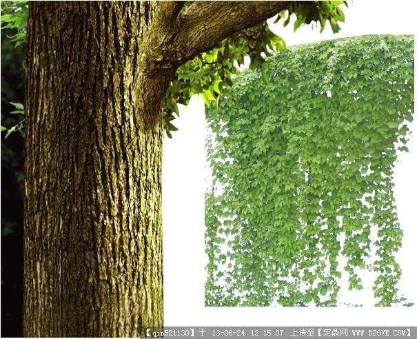 高清藤类植物psd素材