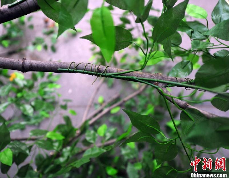 """辽宁:沈阳真树""""种""""上假树叶 - 园林资讯 - 中国园林网"""