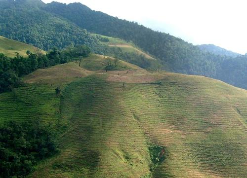 应对极端天气 植树造林必不可少   园林资讯   中国园林网