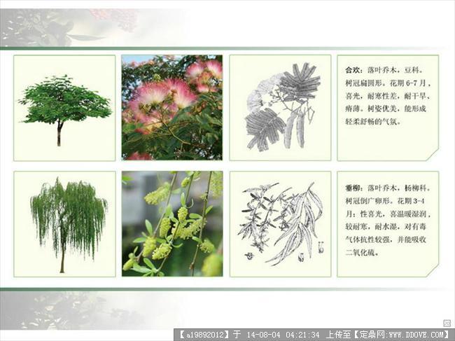 园林景观常用植物图例及文注
