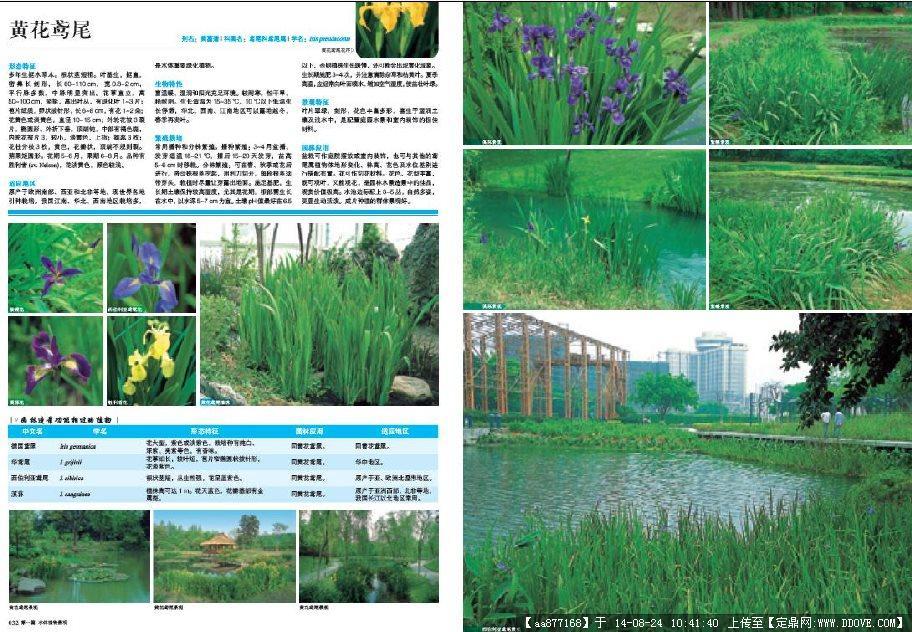 植物设计师应用手册386页pdf