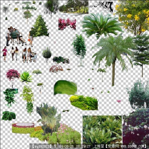 园林景观ps植物素材图例