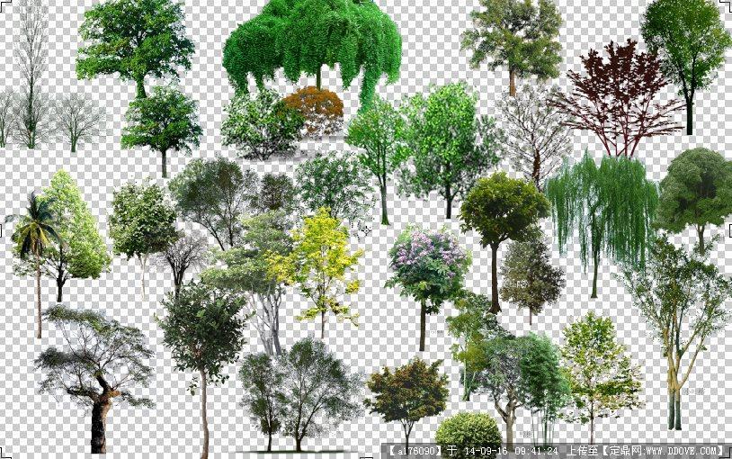 ps立面树园林素材