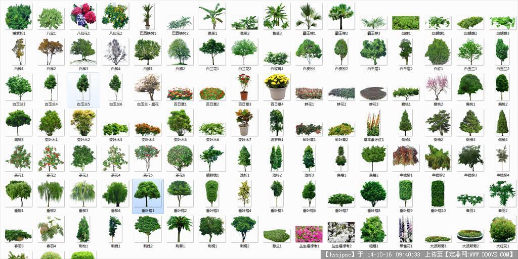 ps植物透明背景素材