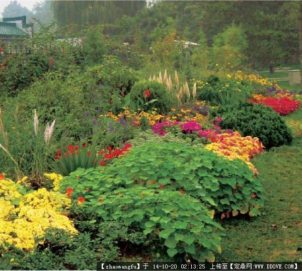 植物配置,花镜设计参考实景图片