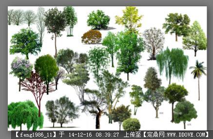 定鼎网 定鼎素材 配景素材 园林植物 ps高清园林绿化乔木psd3  2 9.